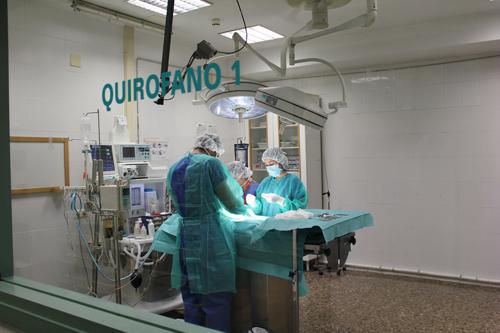 quirofano clinica veterinaria CEU